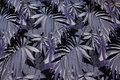 Sort og lilla viscosejersey med bladmønster