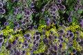 Digitaltryk med lilla Mandstro