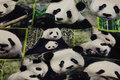Bomuldsjersey med sjove pandahoveder