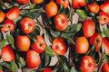 Bomuldsjersey med æbler i digitaltryk