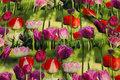 Bomuldsjersey med flotte tulipaner i digitaltryk