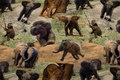 Bomuldsjersey med søde elefanter
