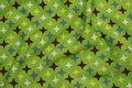 Lys grøn bomuldsjersey med små stjerner