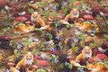 Bomuldsjersey med skovens dyr