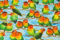 Bomuldsjersey med søde parakitter