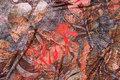 Brun og coral viscosejersey med store flotte blade