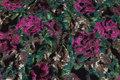 Filtet uld og polyester og viscose i grøn og pink