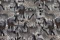 Bomuldsjersey med masser af zebraer