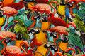 Flot bomuldsjersey med papegøjer og flamingoer i digitaltryk