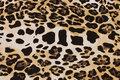 Bomuldsjersey med leopardmønster i gylden, sort og brun