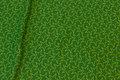 Græsgrøn isoli med fleece-bagside og lime stjerner