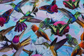 Lys turkis bomuldsjersey med kolibrier og sommerfugle