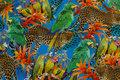 Bomuldsjersey med papegøjer og jaguarer i klare farver