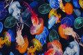 Marine bomuldsjersey med farvestrålende gopler