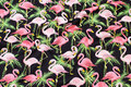 Sort patchwork-bomuld med lyserøde flamingoer