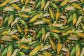 Gul-grøn patchwork-bomuld med majskolber