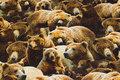 Bomuldsjersey med masser af bjørne