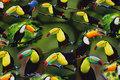 Grøn bomuldsjersey med flotte tukaner