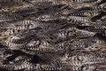 Bukse-stretch i bomuld med dyretryk i sand og sort