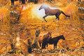 Bomuldsjersey med heste i efterårsfarver