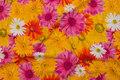 Bomuldsjersey med digitaltryk i frisk pink, orange og gul