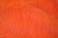 Langhåret pels i orange