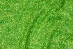Fast, lysegrøn bomuld med nister