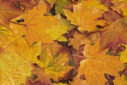 Flot møbel-gobelin med gyldne efterårsblade