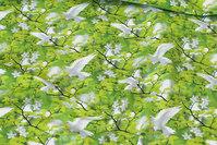 Forårsgrøn bomuldsjersey med hvide duer