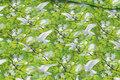 Forårsgrøn bomuldsjersey med hvide duer.