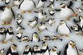 Lysegrå bomuldsjersey med pingviner.