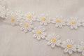 Marguerit bånd, 2,5 cm blomst.