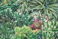 Mellemsvær bomuld med kaktusser i digitaltryk.