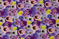 Bomuldsjersey med lilla stedmoderblomster