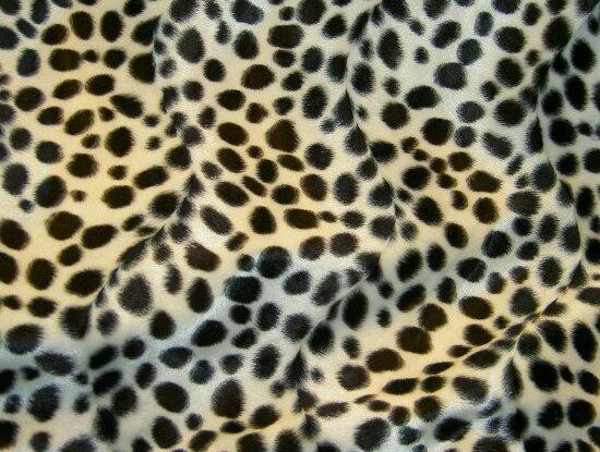 Dalmatinerpels med sorte prikker