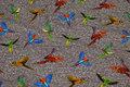 Gråmeleret bomuldsjersey med farvestrålende papegøjer.