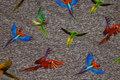 Papegøjer er ca. 5 cm.