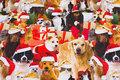 Jule-bomuldsjersey med hunde.