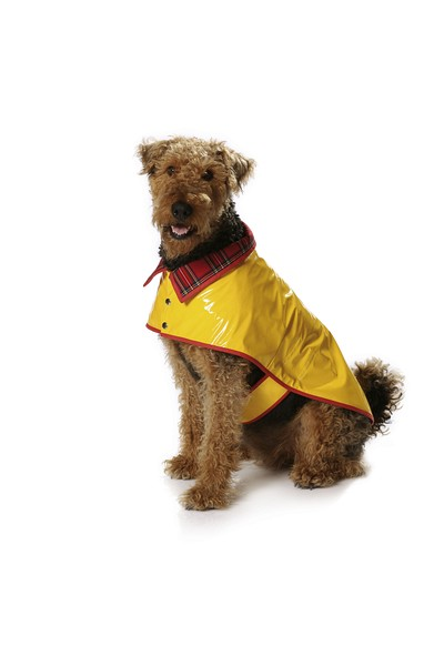 Hundefrakke / hundetøj