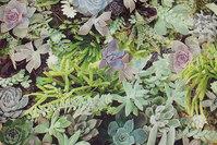 Mellemsvær bomuld med sukkulenter i digitaltryk i grønne nuancer