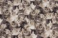 Mellemsvær, fast bomuld med søde katte i hvide og gråbrune nuancer.