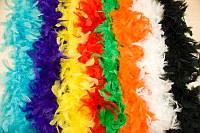 Fjerboaer i mange farver