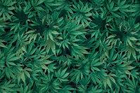 Patchwork-bomuld med grønne  cannabis planter