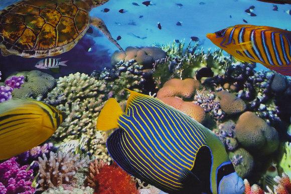 Forstykke-bomuldsjersey med flotte fisk