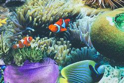 Mellemsvær, blød bomuld med fisk og koraller i digitaltryk