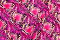 Sports-lycra med pink og coral blade.