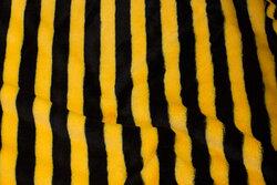 Superblød micro-plys, tværstribet i sort og gul