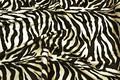 Zebra pels i flot, naturtro kvalitet.