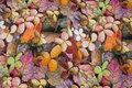 Bomuldsjersey med blomster i fine farver.