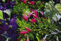 Bomuldsjersey med blomster i lilla, grøn og pink